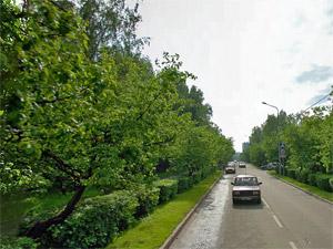 С Яблоневой аллеи похитили свежевысаженные деревья