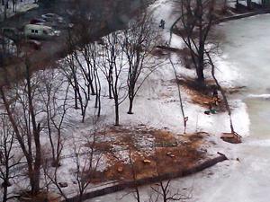 На Быковом болоте вырубают деревья