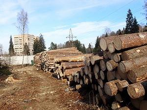 Вокруг Менделеево вырубят почти весь лес