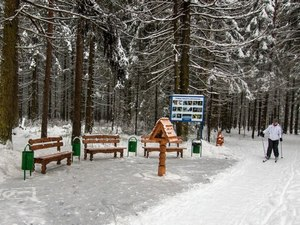 В лесу за 11-м микрорайоном устроили 2-километровый маршрут для «тихого отдыха»