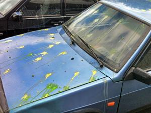 Пейнтболисты обстреляли машины в 14-м микрорайоне