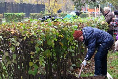 На Яблоневой аллее посадили 14 новых деревьев