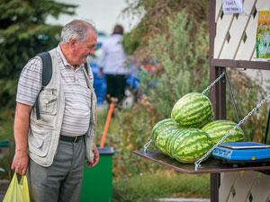 Бахчевые развалы появятся в Зеленограде только к осени