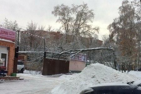 Из-за ледяного дождя в Зеленограде упало 60 деревьев