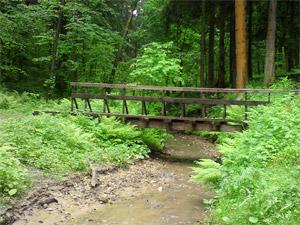 В лесу между 4-м и 12-м мкрн устроят пикниковые зоны и велодорожки