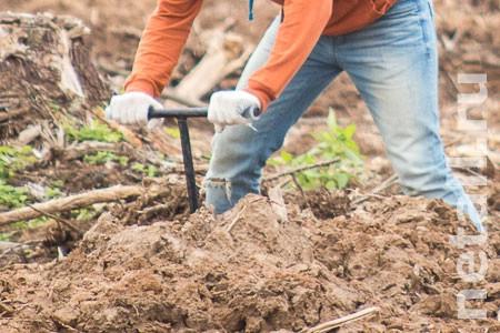 Квартирный вор закопал похищенный миллион в лесу