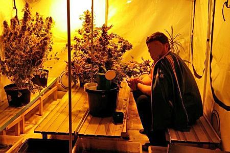 Полицейские вЗеленограде устранили наркоплантацию иизъяли неменее 3кг марихуаны