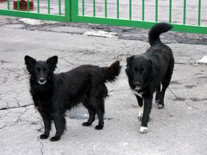 Ветеринары привили от бешенства более 7,5 тысяч животных