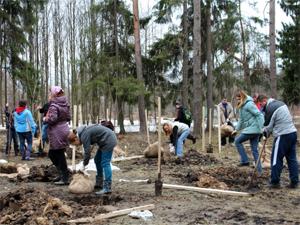Короед уничтожил 20 процентов зеленоградского леса