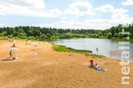 В префектуре пообещали учесть предложение о создании собачьих пляжей