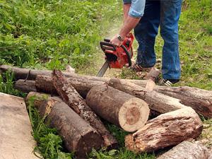 Из-за жука-короеда вырубят более 6 тысяч деревьев