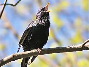 Исчезновение птиц