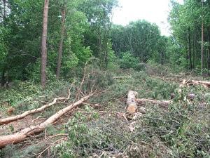 Лесхоз набирает добровольцев для посадки деревьев