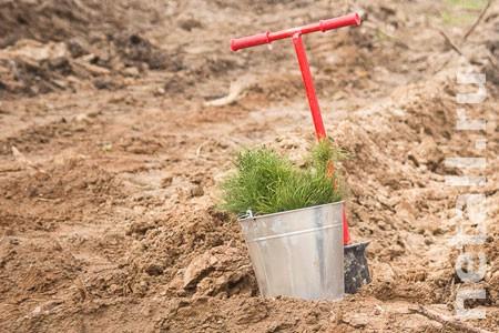 В Зеленограде минимизируют посадки берез
