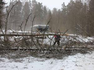 Поваленные деревья перекрыли улицу в Менделеево и подъезд к Фирсановке