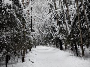 Зеленоградцев попросили не заходить в лес