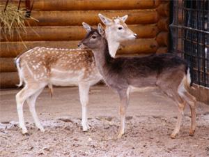 В Зеленограде построят вольеры для ланей