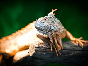 Обитателей Московского зоопарка привезут в Зеленоград