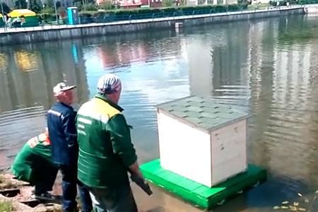На воду Михайловского пруда спустили домики для уток