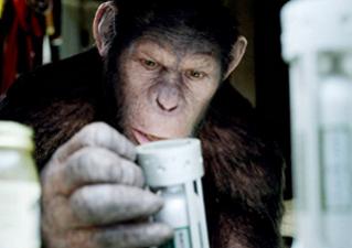 Выходные 6 и 7 августа: «Восстание планеты обезьян», «Несносные боссы», «Красная Шапка против зла», выставка экзотических животных и  акция «Блогер против мусора»