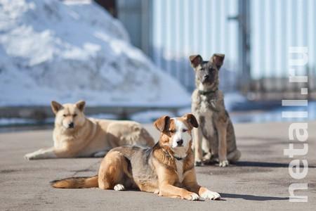 Зеленоградскому приюту для собак выразили «респект» в собянинской комиссии