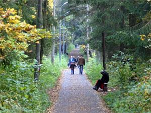 Нападение на девушку в лесу сочли угрозой убийством