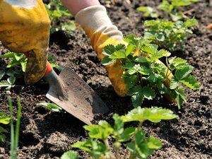 Специальные семинары Language school для садоводов