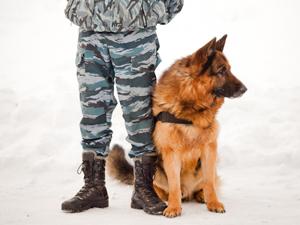Полицейская собака нашла украденный iPhone