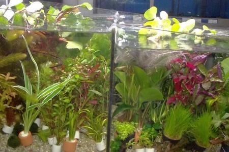 Зоомаркет «Водолей» предлагает большой выбор аквариумистики и товаров для животных