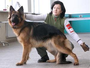 На стадионе «Элион» устроят выставку собак