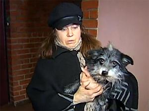 В ДК пройдет концерт в защиту бездомных животных