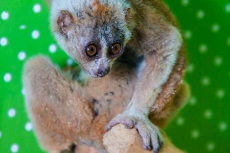 В ТК «Панфиловский» открылся контактный зоопарк