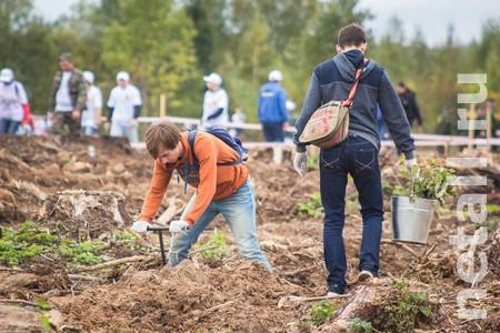 На 13 площадках в Солнечногорском районе посадят «Лес Победы»
