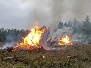 Сжигание леса возле Зеленограда возобновят 11 декабря
