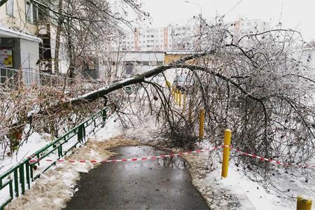 Коммунальные службы Зеленограда переведены на круглосуточный режим работы