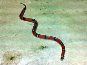 В квартиру зеленоградцев заползла змея