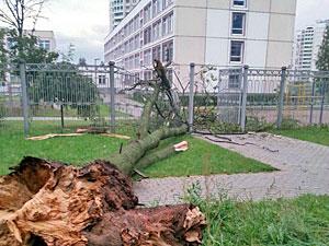 Упавшее во время грозы дерево сломало забор школы