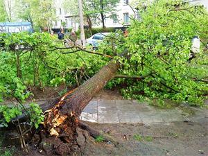 На припаркованные машины упало дерево