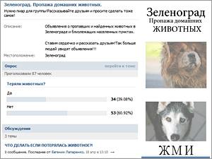 «ВКонтакте» создана группа о потерявшихся в Зеленограде животных