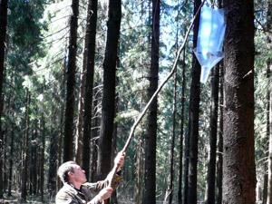 Горожан предостерегли от лесных ловушек
