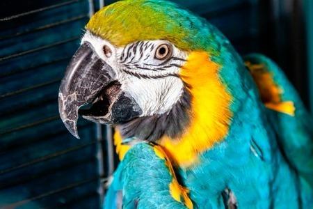 Контактный зоопарк в «Панфиловском» приглашает в гости