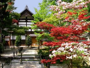 Language school приглашает провести летние каникулы в Японии