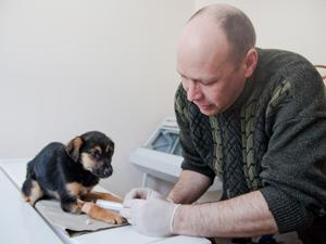 В 9-м микрорайоне бешеная лиса покусала домашнего щенка