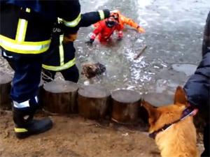 На Дунькином пруду водолазы спасли провалившуюся под лед собаку