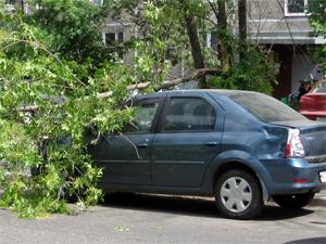 В 7-м микрорайоне на машину упало дерево