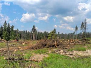 Ко Дню Победы у Фирсановки высадят 21 гектар леса