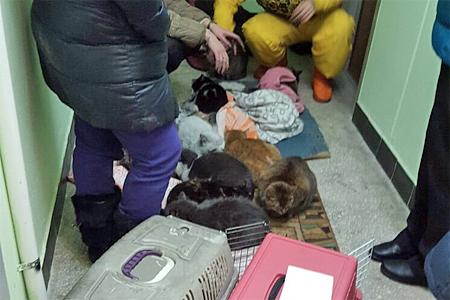 Больше двадцати кошек остались без крова после пожара в 14-м микрорайоне