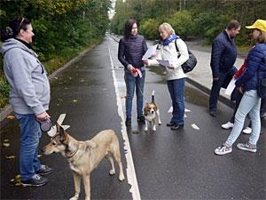 В Зеленограде не нашли ни одного не убирающего фекалии владельца собаки