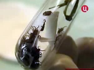 От укусов клещей пострадали 154 зеленоградца