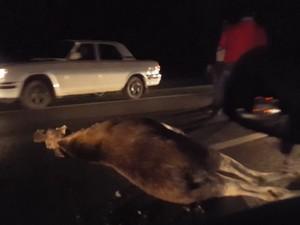 У въезда в Брехово автомобиль сбил лося